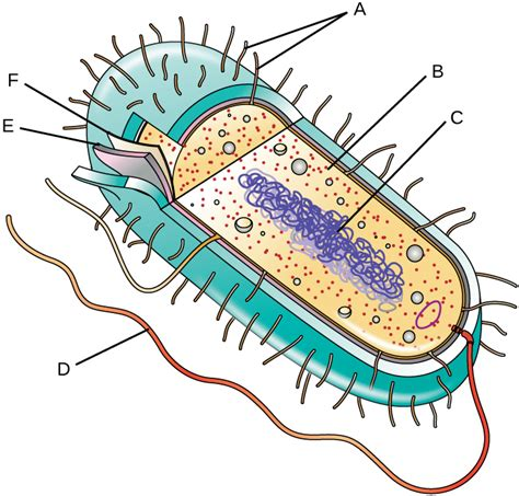 Unique Characteristics Prokaryotic Cells
