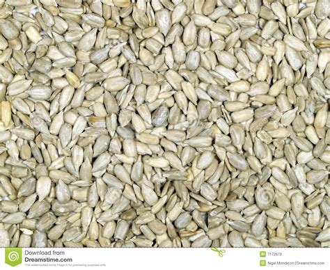 hulled sunflower seeds royalty free stock images image