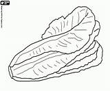 Lettuce Coloring Pages Vegetables Printable Green Oncoloring Carrots sketch template