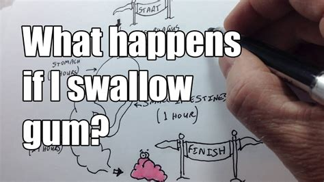 What Happens If I Swallow Chewing Gum? Youtube