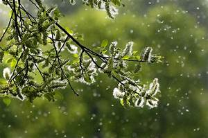 Pollen count forecast for the UK - Netweather.tv