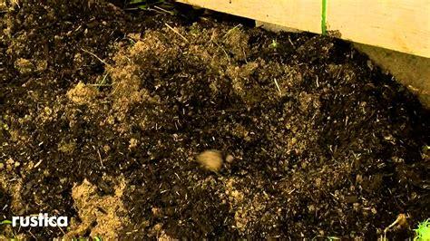 planter une vigne vierge