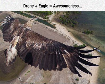 drone memes images  pinterest memes humor drones  funny memes
