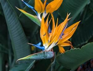 Plant, Indigenous, Plants, In, Your, Garden