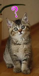 Katzen Fernhalten Von Möbeln : britisch kurzhaar kaufen worauf achten beim kauf von bkh ~ Michelbontemps.com Haus und Dekorationen