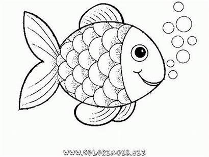 Coloring Fish Rainbow Popular