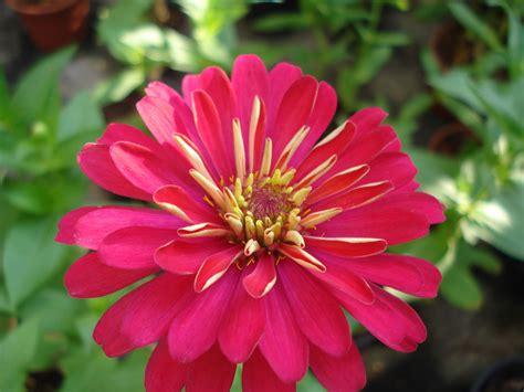 ภาพดอกไม้สวยมาก