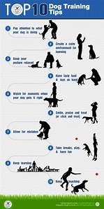50 best images about infographics about pets on pinterest With dog training techniques