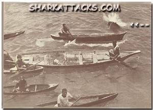 About Shark Attacks Victims stories and photo gallery of ...