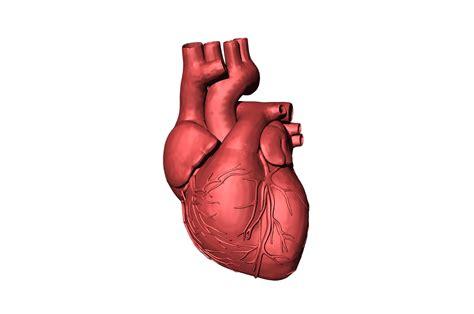 Bei der herzmuskelentzündung ist eine behandlung sehr wichtig. Herzmuskelentzündung - Myokarditis | Diagnose, Symptome & Behandlung