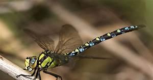 Libellen Im Garten Akrobaten Der Lfte Mein Schner Garten