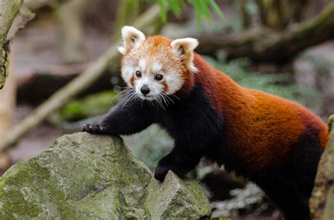 extranos animales en peligro de extincion   conocias