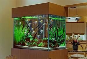 cool fish tanks pets at home - Cool Aquariums: 10 Fish ...