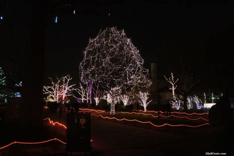 toledo zoo lights revisited inacents