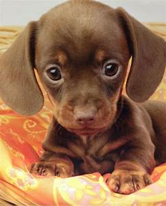 Those puppy eyes - Teh Cute