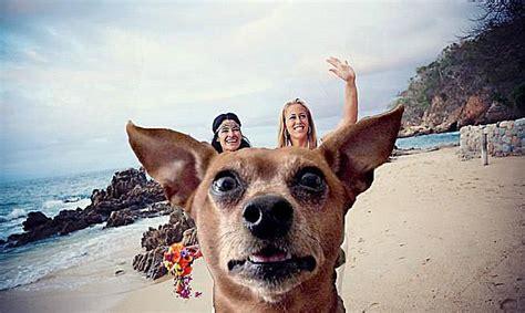 funny beach photobombs