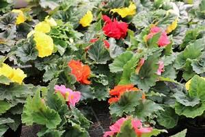 Pflanzen Für Raucher : pflanzen f r den balkonkasten beispiele zum bepflanzen ~ Markanthonyermac.com Haus und Dekorationen