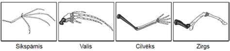 Mugurkaulnieku ekstremitāšu uzbūves līdzības cēlonis — uzdevums. Eksāmens bioloģijā, 12. klase.