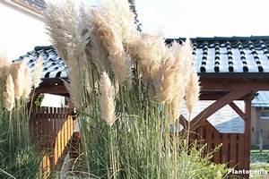 Pampasgras Wann Schneiden : pampasgras cortaderia selloana pflege anleitung ~ Lizthompson.info Haus und Dekorationen