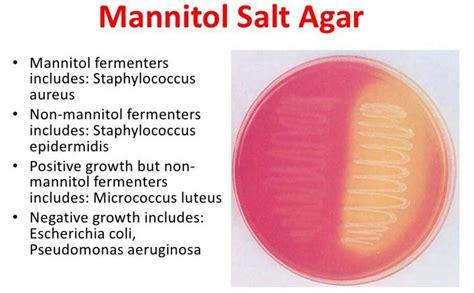 mannitol salt  test