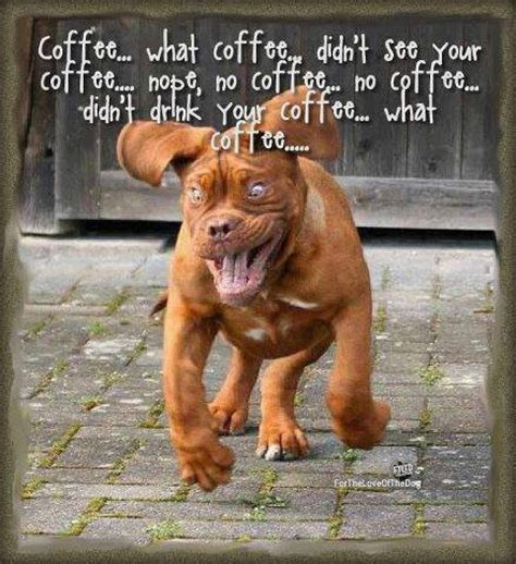 Funny quotes for your captions. too much coffee