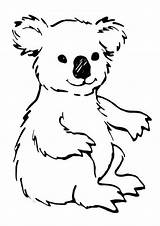 Koala Coloring Pages Printable Bear Animal Sheets Cute Animalplace sketch template