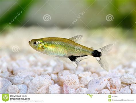 temperature aquarium poisson aquarium eau douce tetra