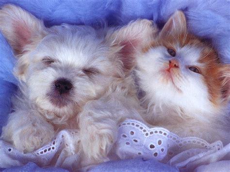 Cool Baby Animal Wallpapers - animal babies wallpapers 4