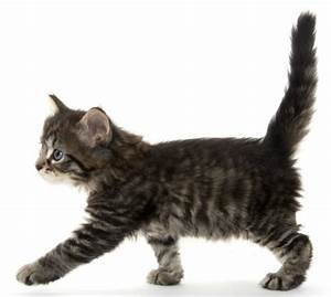 Feline Anatomy 101