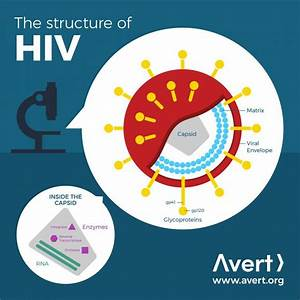 The Science Of Hiv And Aids