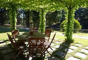 19 Best Pergola Plants Climbing Plants For Pergolas And