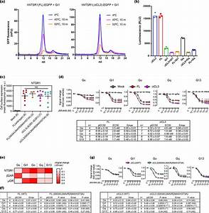 Functional Comparison Between Hntsr1 Fl  And Hntsr1  U2206icl3