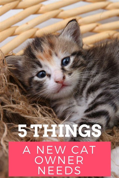 best for cat owners 20 best images about pets furry family members on pinterest cats pets and baby animals
