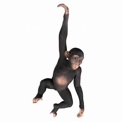 Monkey Hanging Cliparts Jungle Chimpanzee Garden Realistic