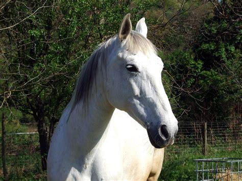 pferd hintergrundbilder schoene bilder kostenlos