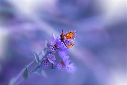 Purple Butterfly Flower Wallpapers Animals Flowers 80kb