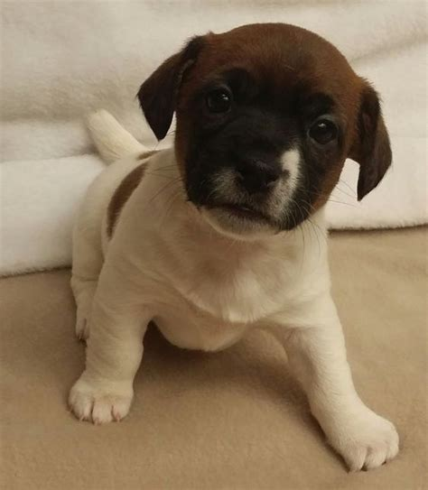Dog Lover Club: 10 อันดับ น้องหมาพันธุ์เล็ก น่ารัก ที่คน ...