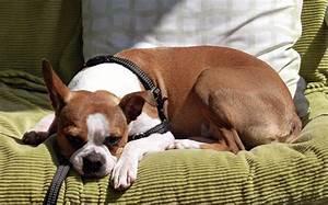Vermieter Verbietet Hund : gehorsamer hund vermieter d rfen haustiere nicht verbieten ~ Lizthompson.info Haus und Dekorationen