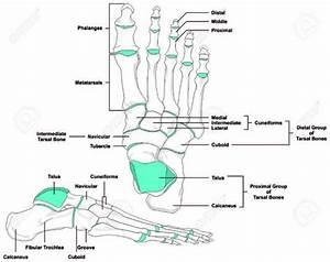 Anatomical Position Diagram