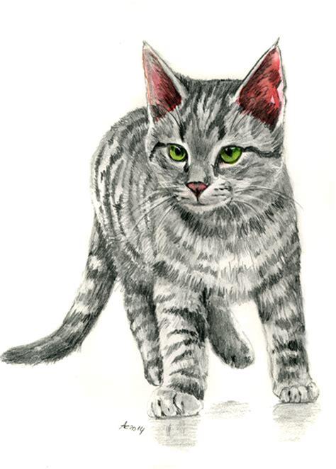 Tabby Kitten Pencil Drawing By Artitart On Deviantart