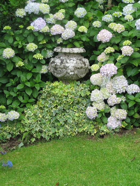 hydrangea border garden container in hydrangea border gardening pinterest gardens pottery and strawberry pots