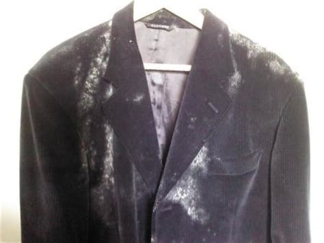 mold growing on clothes and shoes mold inspection testing