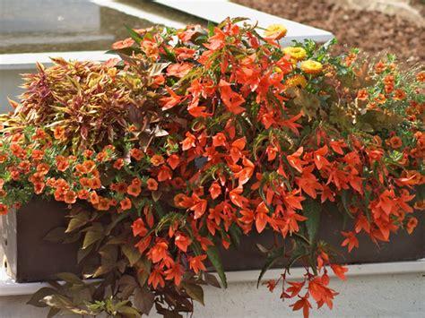 Pflanzen Für Den Balkon by Blumen Am Balkon