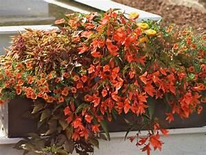 Blumen Für Den Balkon : pflanzen f r den balkon in orange ~ Lizthompson.info Haus und Dekorationen