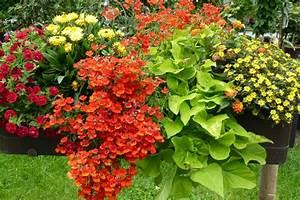 Balkonkästen Bepflanzen Beispiele : large ~ Lizthompson.info Haus und Dekorationen