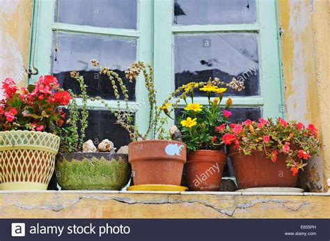 Indoor Windowsill Flowers by Flowers In Plant Pots On A Windowsill In A