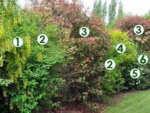 les 25 meilleures idees de la categorie arbre persistant With attractive idee de plantation pour jardin 3 planter une bordure vegetale amenagement de jardin