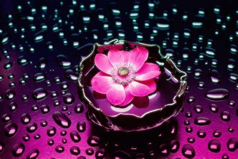 fleur de bureau des fleurs pour le bureau de votre ordinateur fonds d