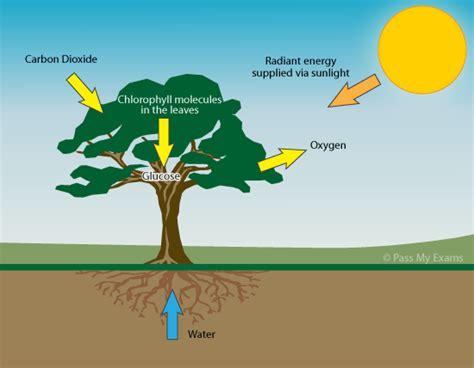 photosynthesis pass  exams easy exam