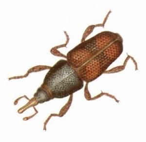 Pantry Bug Pest Control